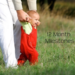 Milestones for Babies by the End of 12 Months 1 Year
